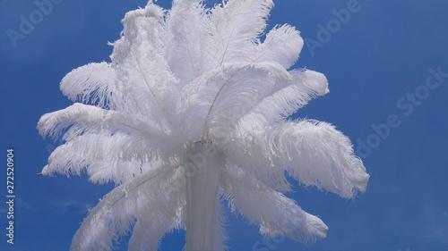In de dag Struisvogel White ostrich feather in vase and blue sky - wedding decoration details.