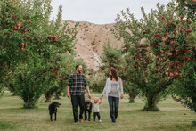Happy Family Walking In Apple Orchard