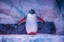 Penguin Posing Behind The Glass Of Oceanarium