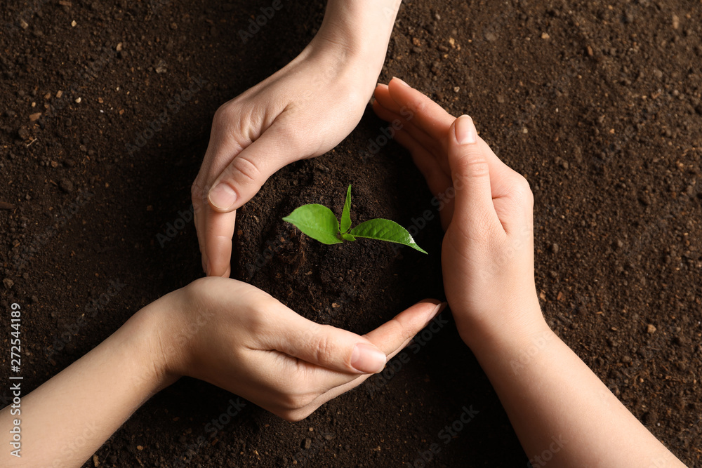 Fototapeta People protecting young seedling on soil, top view