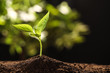 Leinwandbild Motiv Young seedling in soil on blurred background, space for text