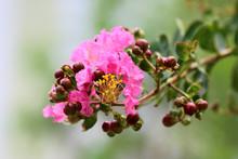 Pink Flower On Green Backgroun...