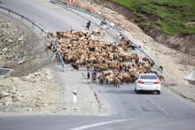 A Flock Of Sheep Eating Grass In The Green Hills Of The High Caucasus Near Shemakha, Azerbaijan. Car Stuck