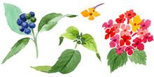 Red Lantana Floral Botanical F...