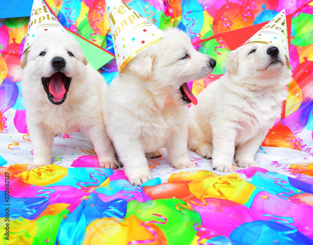 funny birthday cute dog puppies