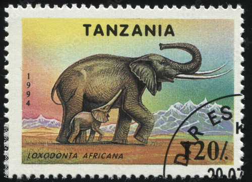 Fotografia  Tanzania elephant
