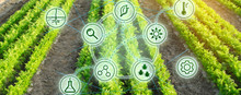 Growing Organic Vegetables With New Technologies. Development Of Innovation And Research. Investing In Farming. Study Quality Of Soil And Crop. Selection Of Varieties. Agriculture. Carrot