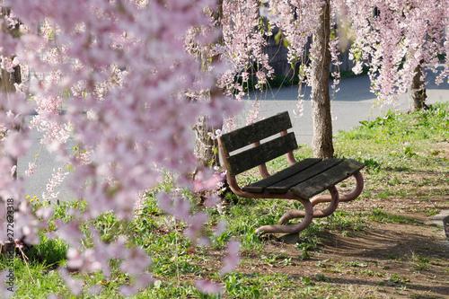 Photo 枝垂れ桜とベンチ