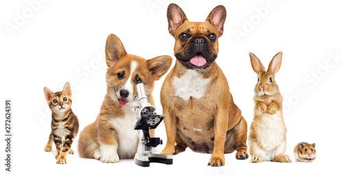dog vet and microscope on white background © Happy monkey