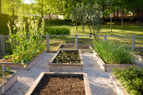 Fotografia Community kitchen garden