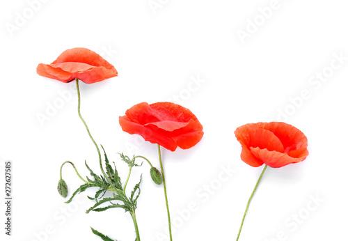Foto op Canvas Poppy Beautiful red poppy flowers on white background
