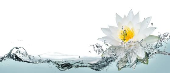 Lotus flower in spray of water.