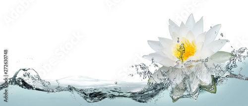 Cadres-photo bureau Fleur de lotus Lotus flower in spray of water.