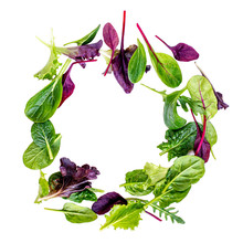 Salad Mix  Isolated On White Background. Food Frame Made Of Fresh  Salad With Arugula, Lettuce, Chard, Spinach And Beets Leaf.