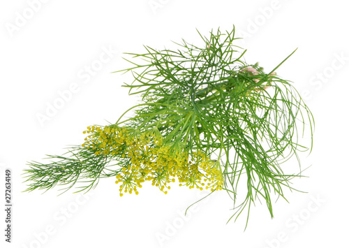fresh dill isolated on white background Fototapete