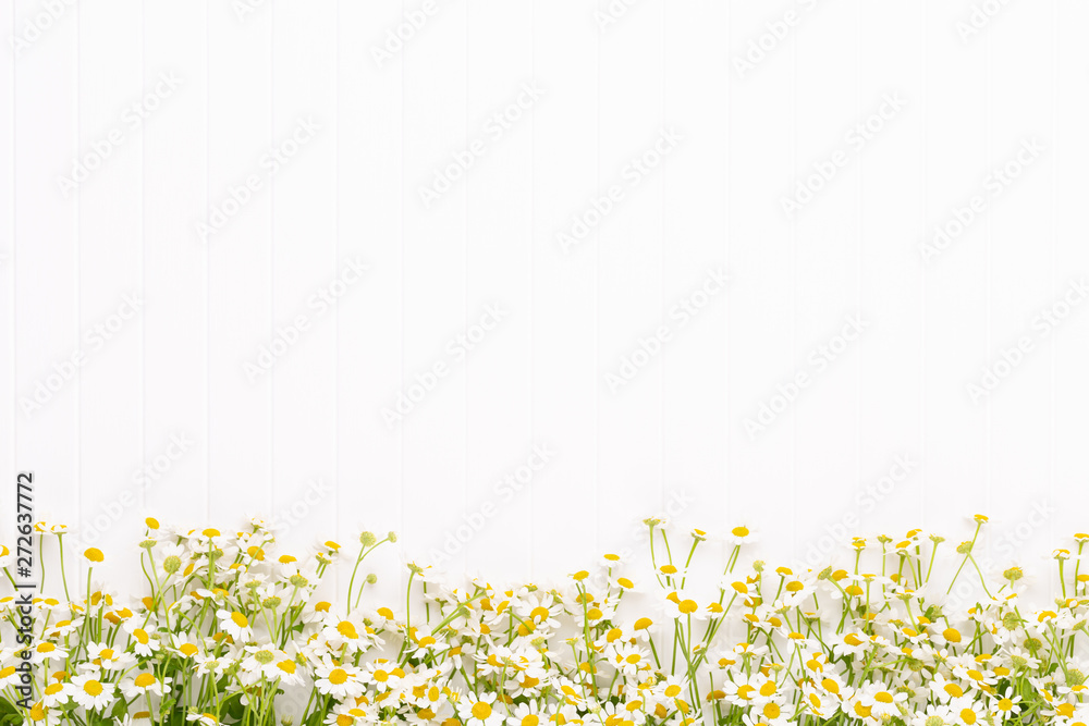 Fototapety, obrazy: Chamomile flowers floral framee. Flat lay, top view.
