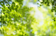canvas print picture - Closeup of nature green leaf and sunlight with greenery blurred background use as decoration ecology environment , fresh wallpaper concept. - Image