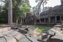 Huge Roots  On The Temple In P...
