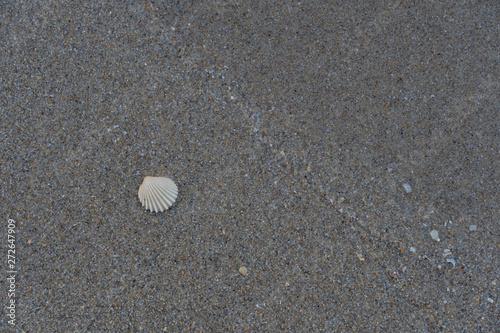 Photo sur Plexiglas Zen pierres a sable Sea shell on the sand