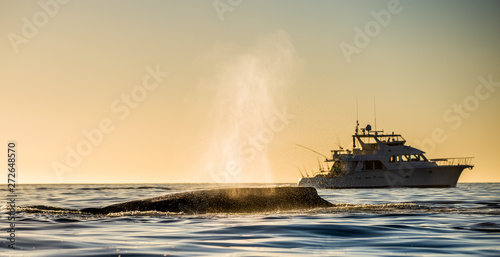 The whale shows the fountain of steam at sunset sky and fishing yacht on the background Canvas Print
