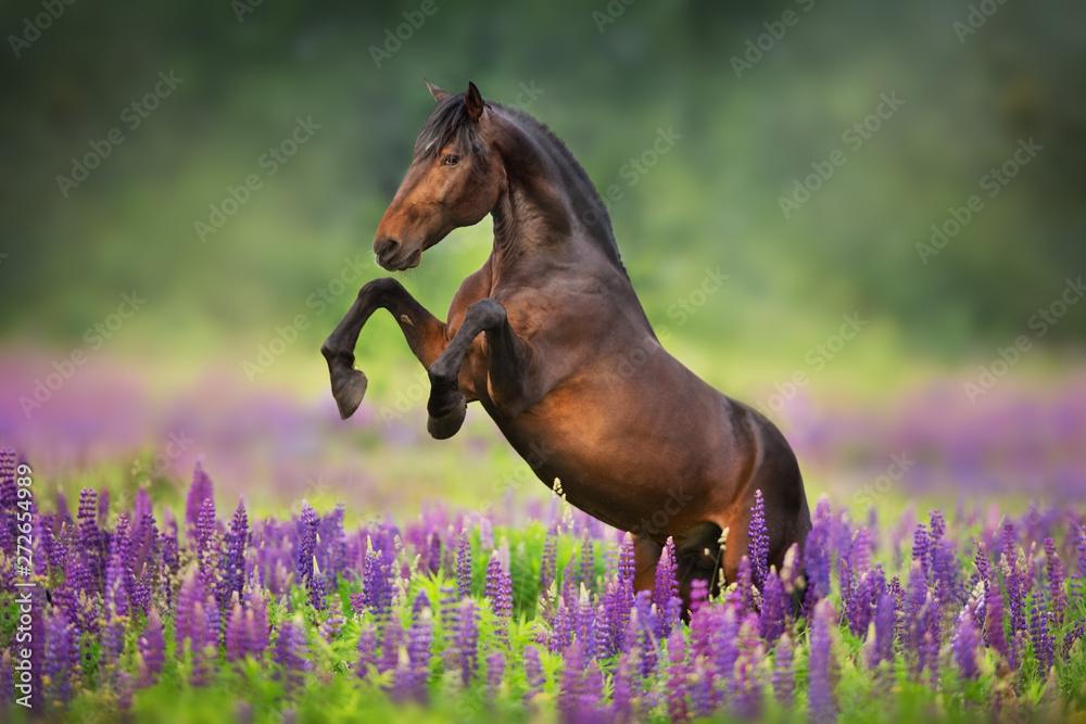 Obraz horse running in a field fototapeta, plakat