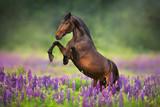 Fototapeta Horses - horse running in a field