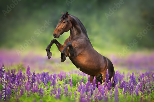 Poster Chevaux horse running in a field