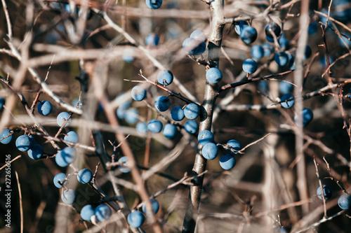 Photo  Ripe berry turn