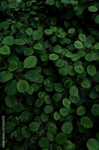 sumac green leaves background - 272656732