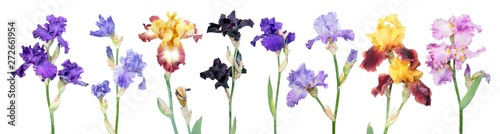 Keuken foto achterwand Iris Big set of different color iris flowers with green leaves isolated on white background. General view of flowering plants. Cultivars from Tall Bearded (TB) iris garden group