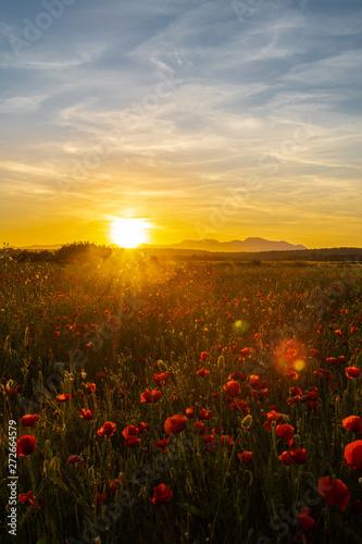 Fototapeta Sonnenuntergang in Mallorca / Mohnfeld vor dem Gebirgszug der Sierra de Tramuntana obraz na płótnie