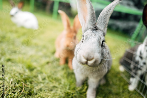Foto Rabbit in farm cage or hutch. Breeding rabbits concept