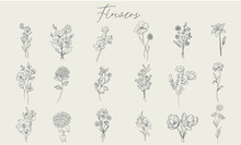 Set Of Handdrawn Floral Elements For Design