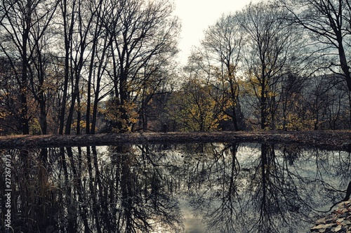 Fotografia, Obraz  Colourful broad leaf  trees reflected on water surface at autumn / fall daylight