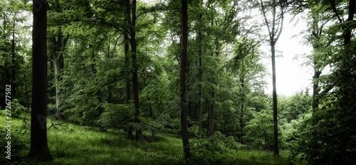 Fotografia, Obraz  Broad leaf trees forest at spring daylight
