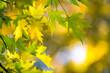 Leinwandbild Motiv Autumn forest on sunny day . autumn leaf