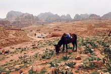 Panorama, Jordanie