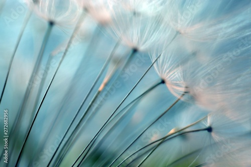 Spoed Foto op Canvas Paardenbloem Dandelion. Dandelion seeds close up. Soft focus
