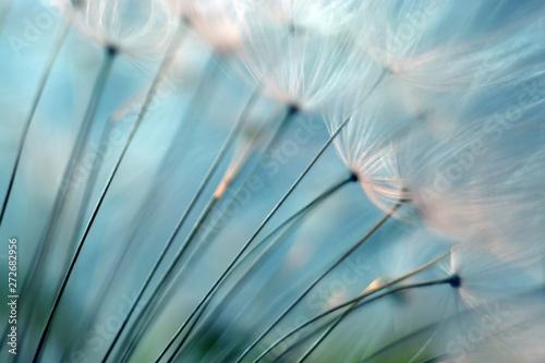 Canvas Prints Dandelion Dandelion. Dandelion seeds close up. Soft focus