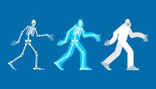 Yeti Skeleton Islated. Bigfoot Skull And Bones. Abominable Snowman. Sasquatch Remains