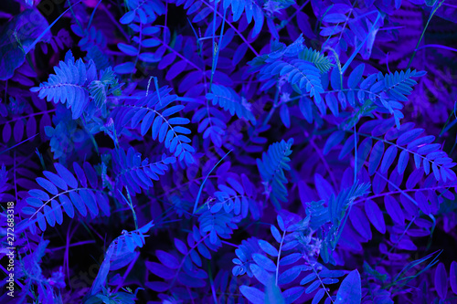 Abstraction of blue neon color - 272683318