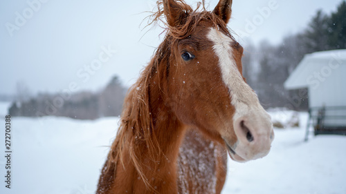 horse in winter