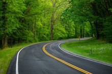 Road In Forest. Tennessee. USA