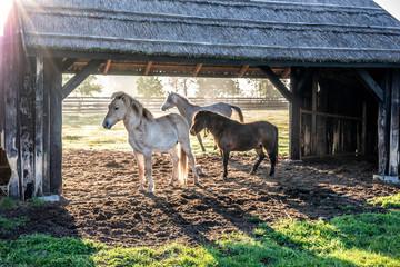 przepiękne konie