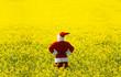Leinwandbild Motiv Christmas Santa Claus  in blooming yellow field. Spring vacation concept.