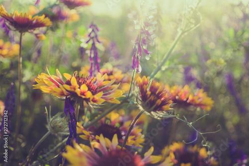 Fotografía  Summer wildflowers and sunny meadow