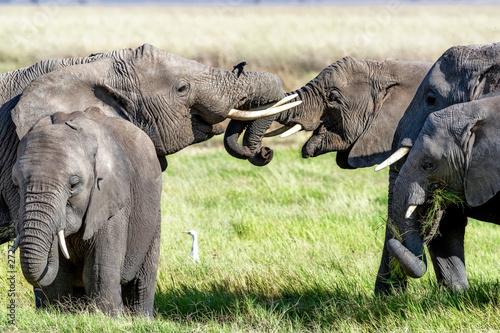 Elephant Family Trunks Entw...