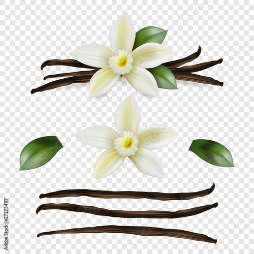 Pinturas sobre lienzo  Vector 3d Realistic Sweet Scented Fresh Vanilla Flower with Dried Seed Pods and Leaves Set Closeup Isolated on Transparent Background