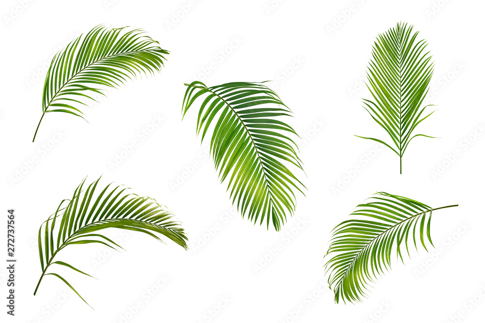 Fototapety, obrazy: Collection of palm leaves isolated on white background