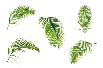 Zbirka palminog lišća izoliranog na bijeloj pozadini